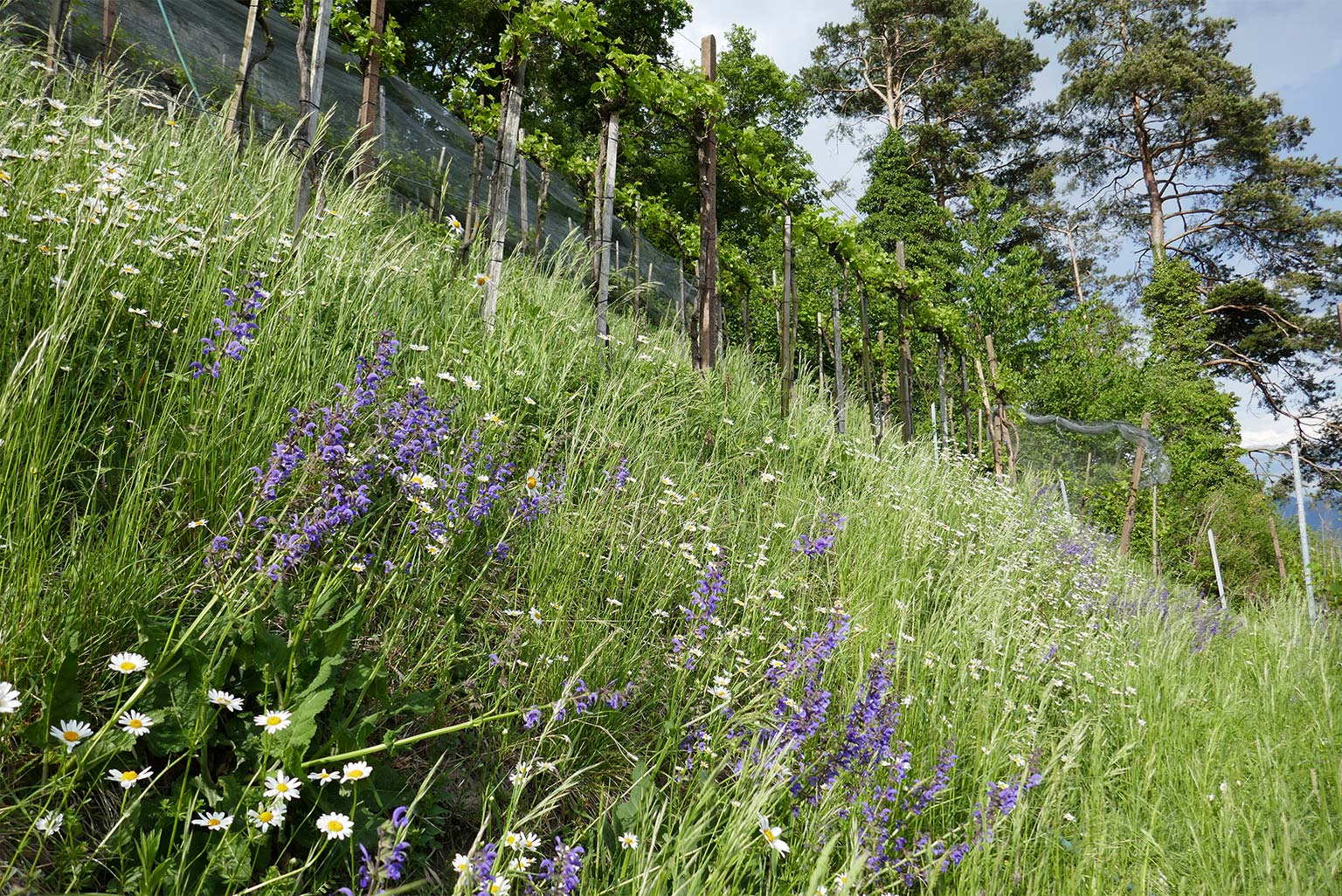 Blumenwiesen an Terrassenböschungen