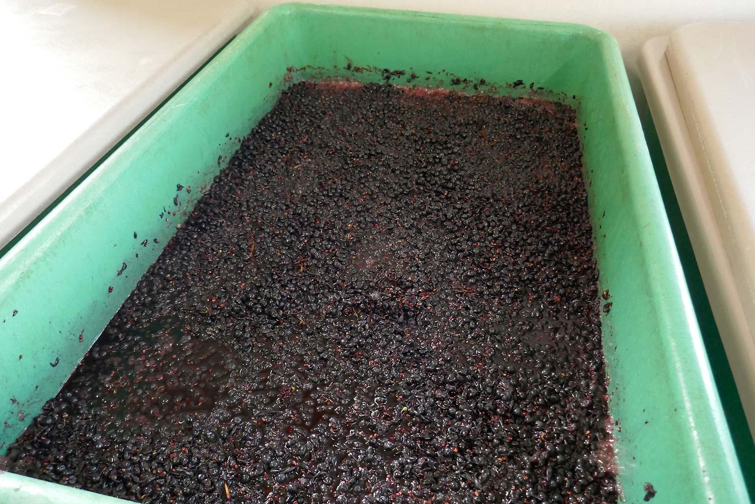 Rotwein auf der Maische