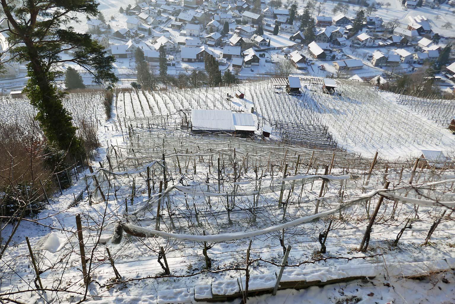 Winterlicher Buechberg